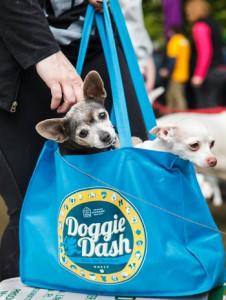 Doogie_Dash_OHS