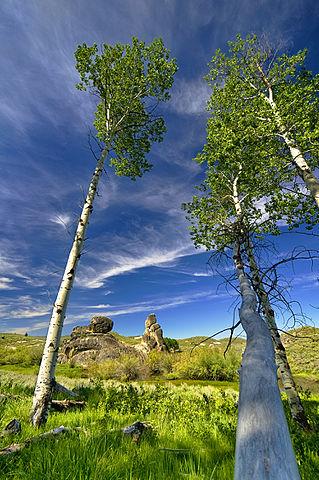 castle rocks trees