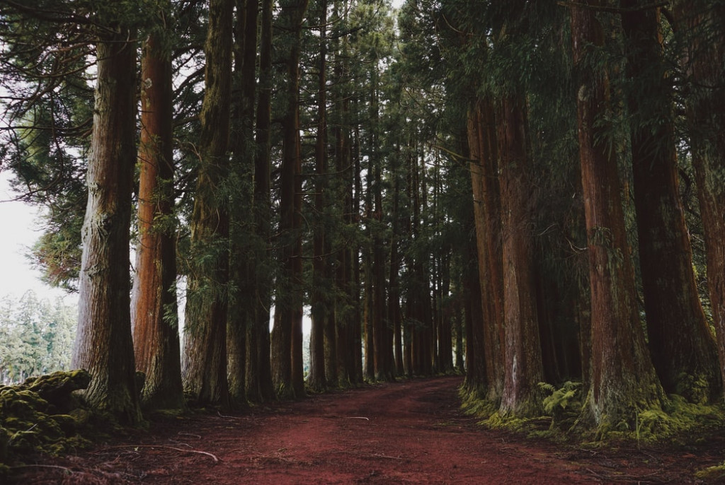 Redwood National Park for RV Camping